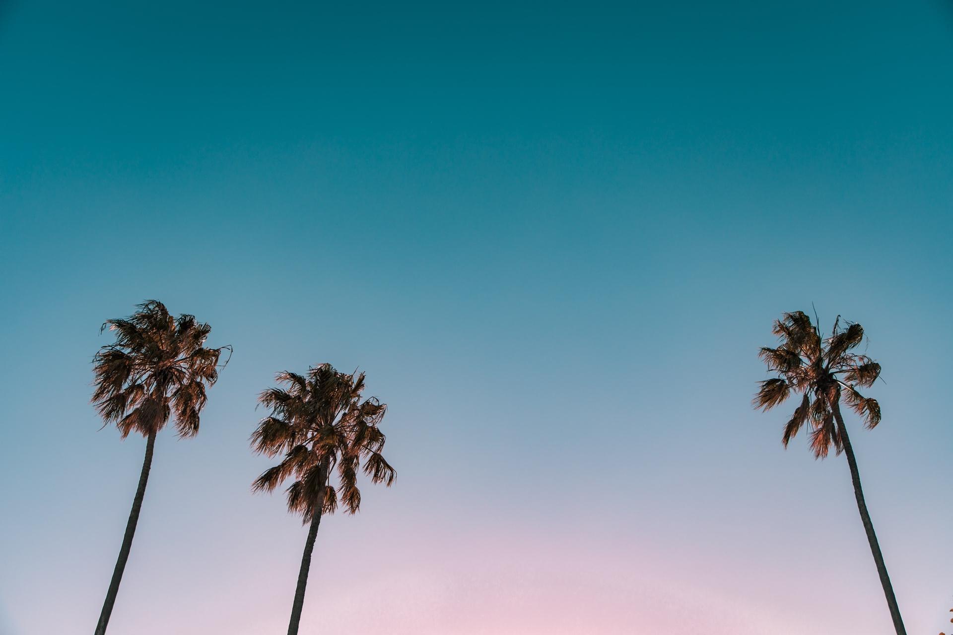 Photo: Three Palms by Jamie Davies
